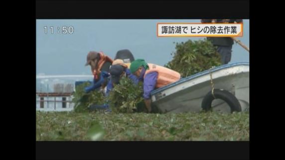 諏訪湖でヒシの除去作業