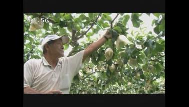 台風に警戒  農家は収穫急ぐ