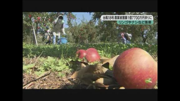 リンゴやナシなど落果 台風18号農業被害額 1億7700万円余りに