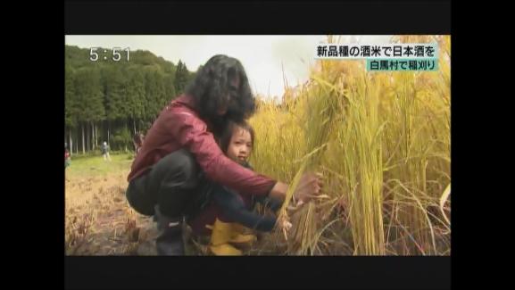 白馬村で稲刈り 新品種の酒米で日本酒を