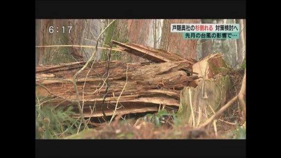 先月の台風の影響で・・・ 戸隠奥社の杉倒れる 対策検討へ